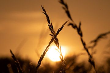 Untergehende Sonne von Jacob Jan ten Klooster