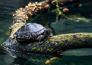 Schildkröte auf Baumstamm
