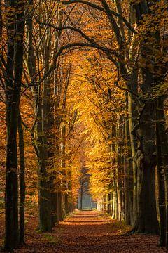 Jours d'automne ensoleillés sur Eelke Brandsma