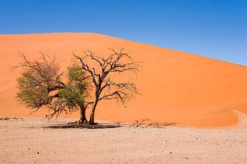 Landschaft Namibia, Sossusvlei, Wüste von Liesbeth Govers voor omdewest.com