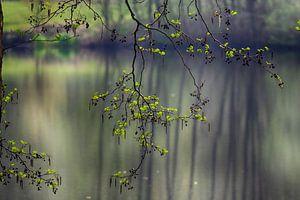 Frühlingsgrün von Rob De Jong