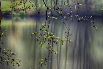 Vert printemps sur Rob De Jong