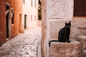Schwarze Katze in den Straßen von Rovinj, Kroatien. von Rebecca Gruppen