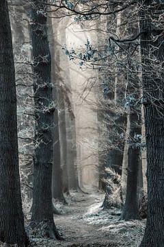 Auf dem Weg zur Schneekönigin von Lars van de Goor