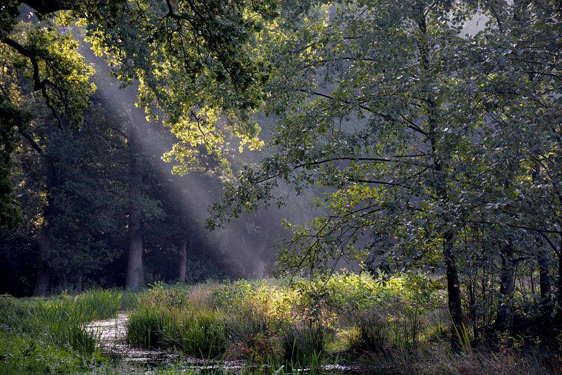 Asserbos bomen van Henriette Tischler van Sleen