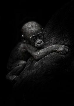 trieste kleine welp. Schattige kleine gorillajongen klampt zich vast aan moeders vacht. Geïsoleerde  van Michael Semenov
