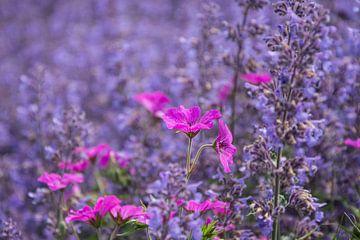 Rose in blauw ... de lente houd van jou. van Yvonne van der Meij