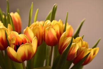 Ein gelb-oranger Tulpenstrauß von Philipp Klassen