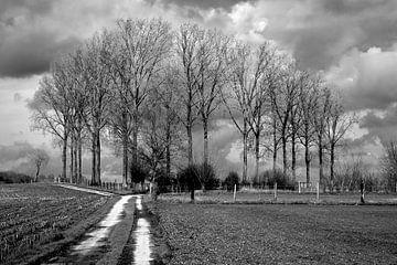 Landschaftsbäume und dunkle Wolken von Koen Pletinckx