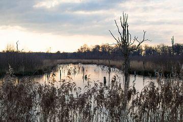 """Landschap nationaal park """"Groote Peel"""" in de winter van Ger Beekes"""