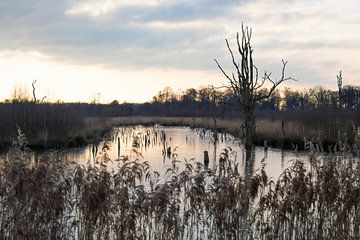 "Le parc national paysager ""Groote Peel"" en hiver sur Ger Beekes"