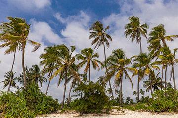 Palmbomen in Zanzibar van