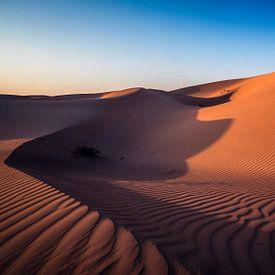 Woestijn van Reinier Snijders