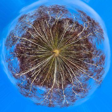 Berkenbos in de winter, little planet van Rietje Bulthuis