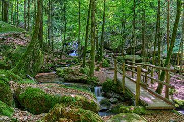 Forêt magique de Gertelbach sur Uwe Ulrich Grün