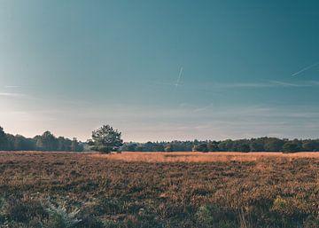 Eenzame boom op de vlakte van de Veluwe van Mick van Hesteren