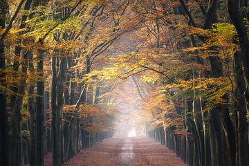 Bospad in mooie Herfstkleuren van Arnoud van de Weerd