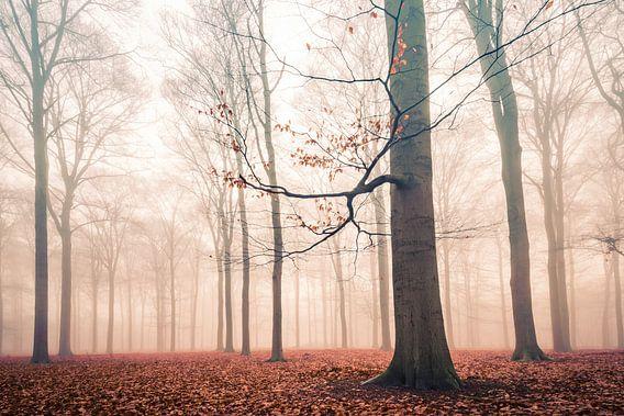Lonely Trees in winter van Sjaak den Breeje