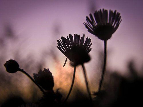 Dream for sunset sur