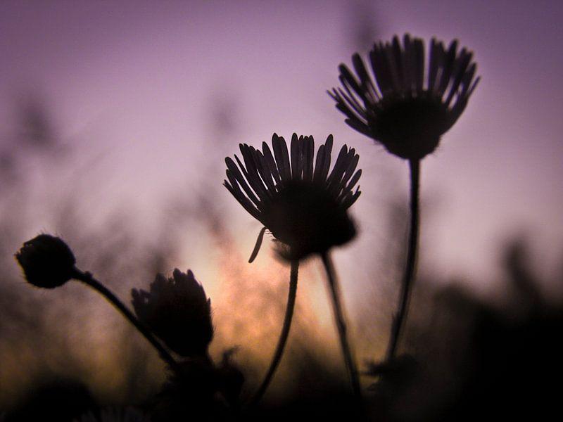 Dream for sunset von Ruxandra Proksch