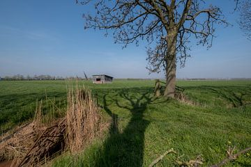 Schuur in weiland 01 von Moetwil en van Dijk - Fotografie