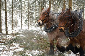 Werkpaarden in de sneeuw 5912004122 fotograaf Fred Roest van Fred Roest