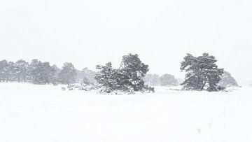 Schneelandschaft auf der Veluwe von Albert Beukhof