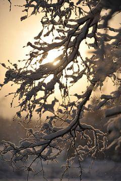 winter 2 von Marieke EWA