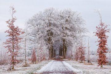 Winter Nienoord Leek Groningen:  Bomen met rijp  van R Smallenbroek