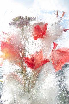 Eisblumen von Johan Pape