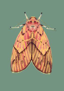 Rosa Gelb der Motte auf farbigem Hintergrund von Angela Peters