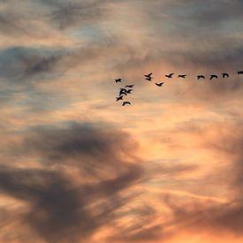Trekvogels van Bob Bleeker