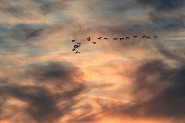 Trekvogels von Bob Bleeker