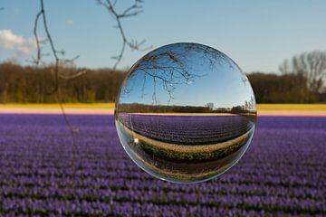 Blühende Zwiebelfelder durch eine Glaskugel von Roberto Daniele