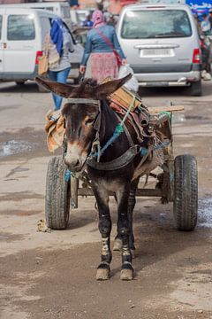 Esel in Marrakesch von marco de Jonge