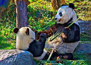 Große Panda