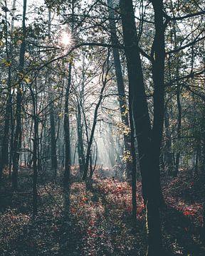 Sprookjesachtig licht in de bossen van de Veluwe van Mick van Hesteren