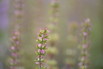 zartgrün und rosa von Tania Perneel