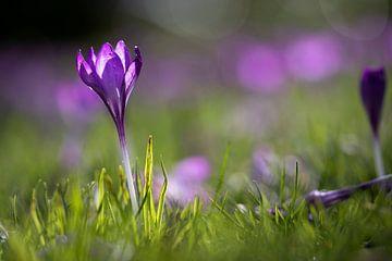 Le printemps dans le Wilhelminapark de Breda sur Tom Hengst