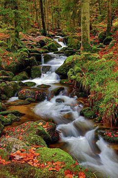 Herfststroming in het bos