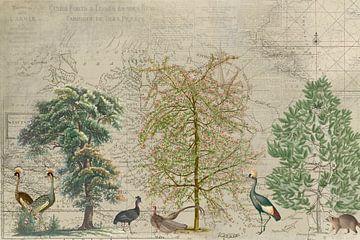 Die Reise der Vögel von Andrea Haase