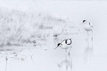Gelassenheit in Schwarz-Weiß von Yvonne Kruders