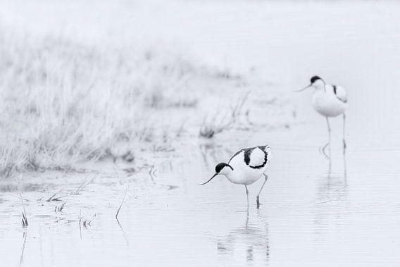 Vogels in zwart wit