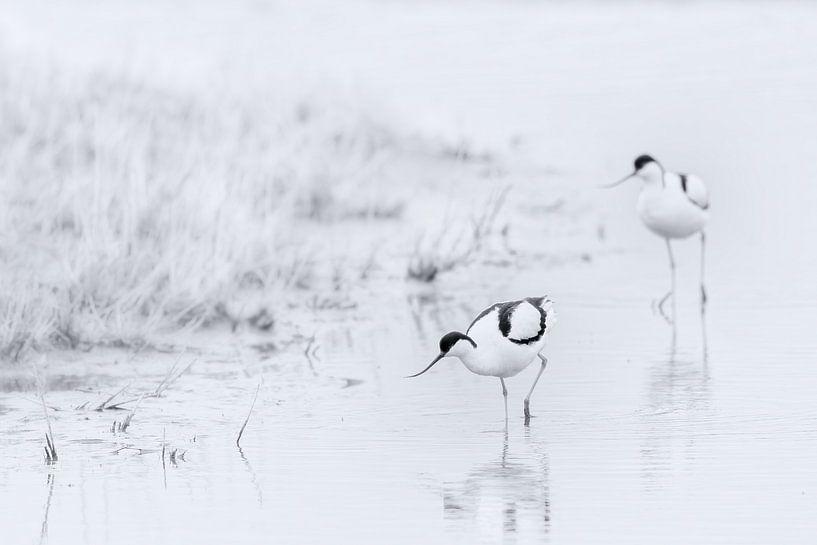 Vogels in zwart wit van Yvonne Kruders