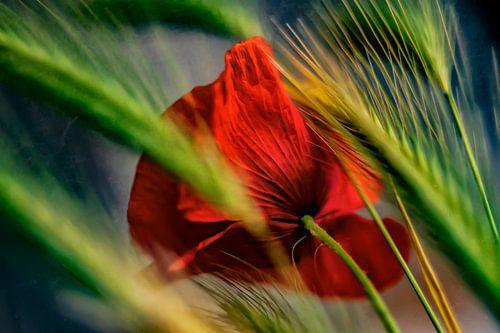 Poppy in the cornfield von Ellen Driesse