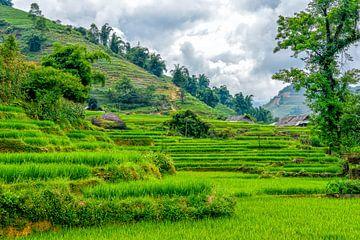 Rijstvelden in SaPa, Vietnam van Richard van der Woude