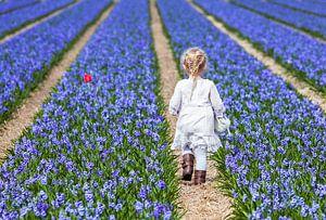 Klein meisje in Hollands bloemenveld van