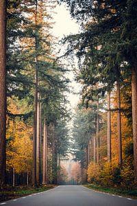 Een Prachtige Herfst Weg van Wahid Fayumzadah