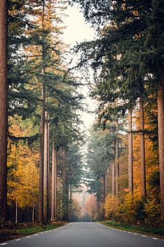 Eine wunderschöne Herbststraße von Wahid Fayumzadah