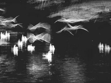 Vögel im Flug von Keserű Collective